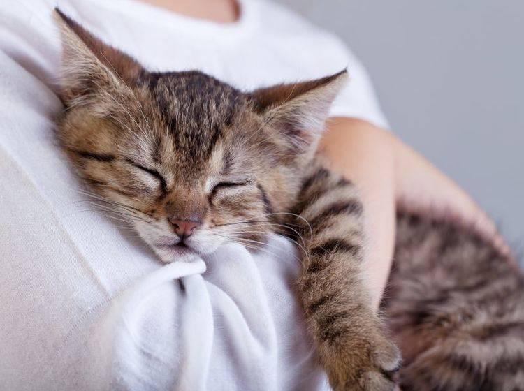 Ganz wichtig im Notfall: Ruhe bewahren und gut vorbereitet sein — Bild: Shutterstock / Ilike