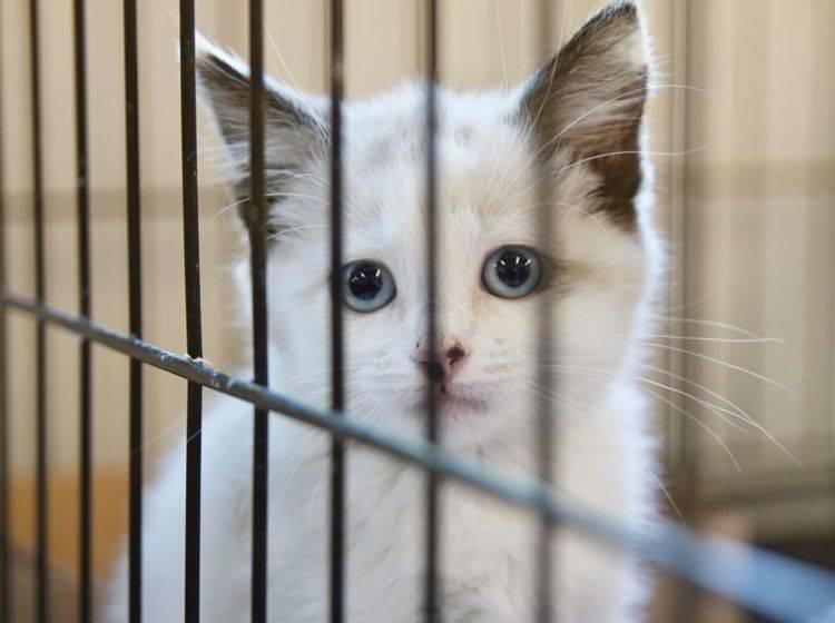 Katzenleukose: Tierheimkatzen und Freigänger sind besonders gefährdet — Bild: Shutterstock / Annette Shaff