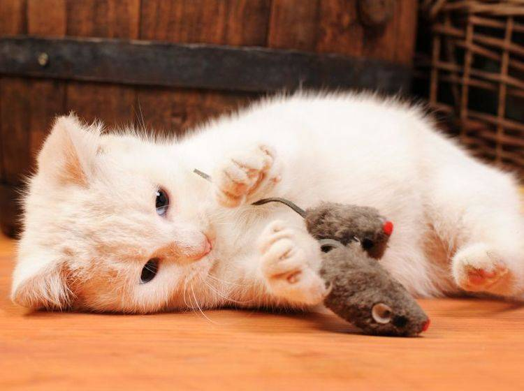 Vier Spielzeugmäuse, die Ihre Katze auf Trab bringen! — Bild: Shutterstock / dragi52
