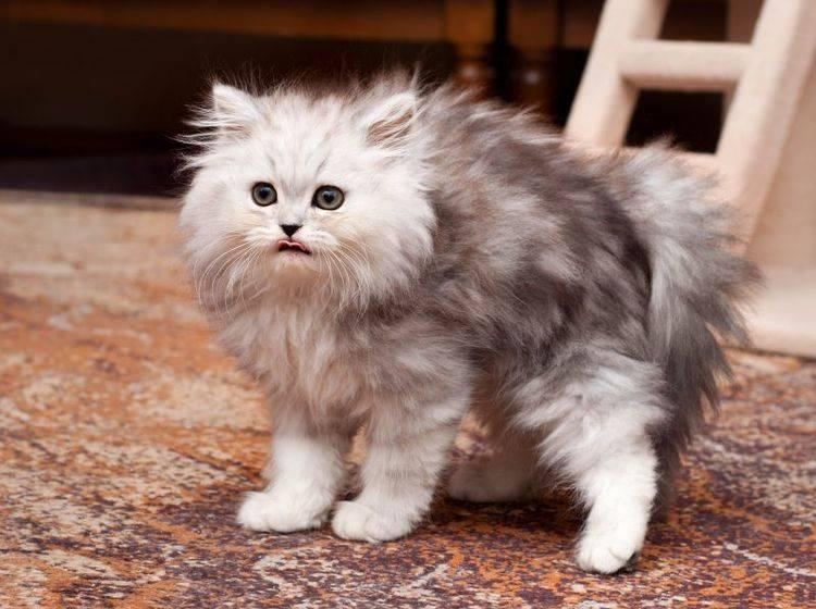 Vier Tipps, die Ihrer Katze den Fellwechsel erleichtern — Bild: Shutterstock / Trybex