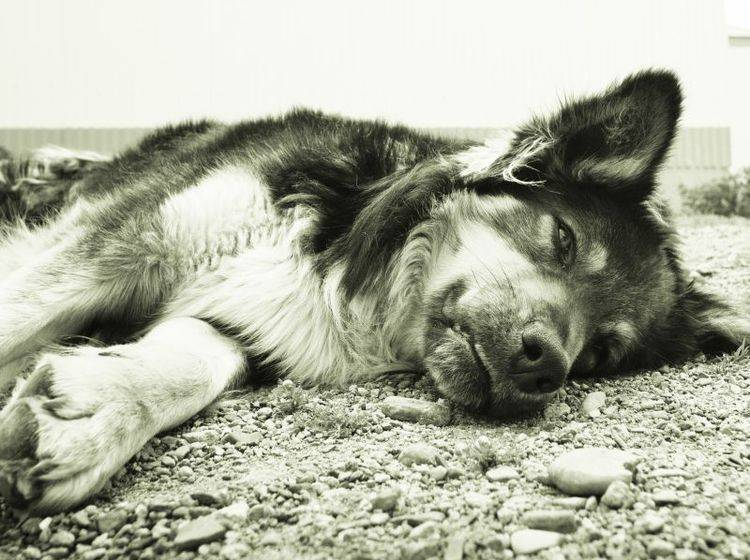 Hunde aus Rumänien brauchen unsere Hilfe — Bild: Shutterstock / Vega Gonzalez