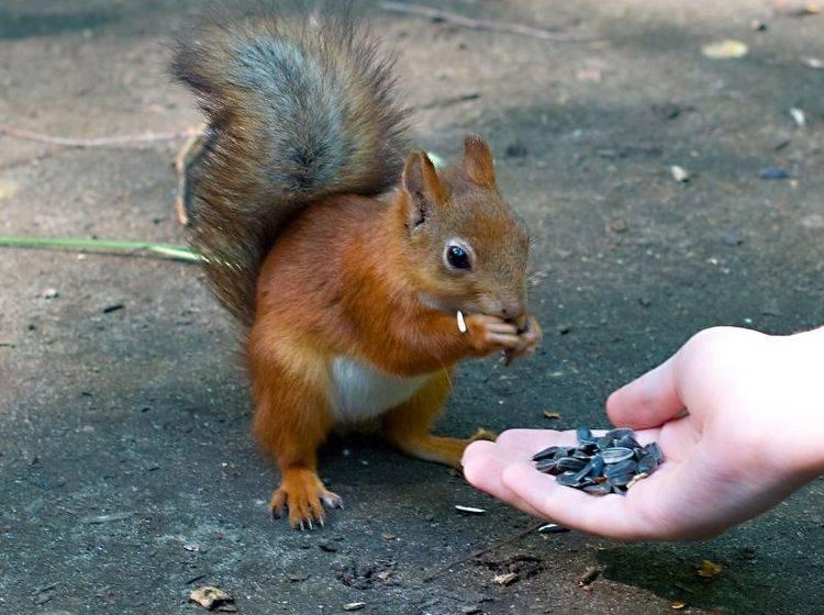 So können Sie Wildtieren durch den Winter helfen — Bild: Shutterstock / svand