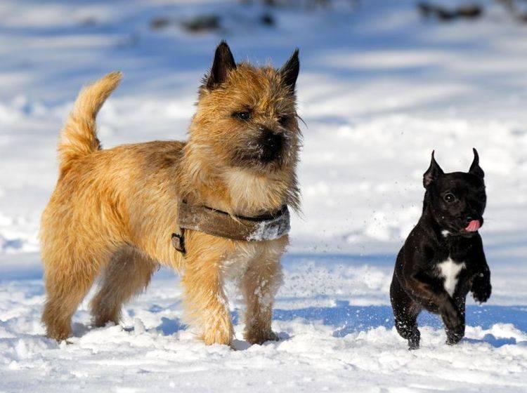 So schön kann ein Hundespaziergang im Winter sein — Bild: Shutterstock / Lars Christensen