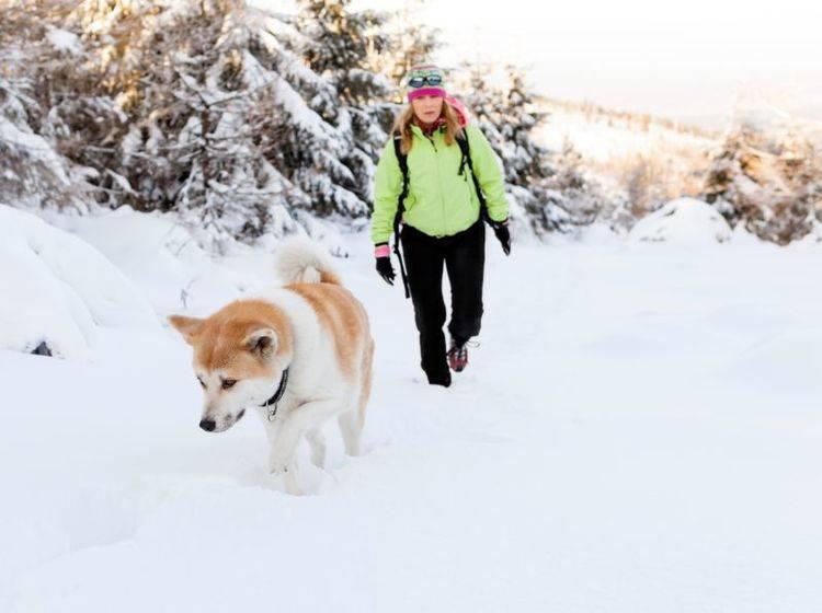 Mit dem Hund im Winter nach draußen zu gehen ist mit etwas Vorbereitung besonders schön — Bild: Shutterstock / Blazej Lyjak