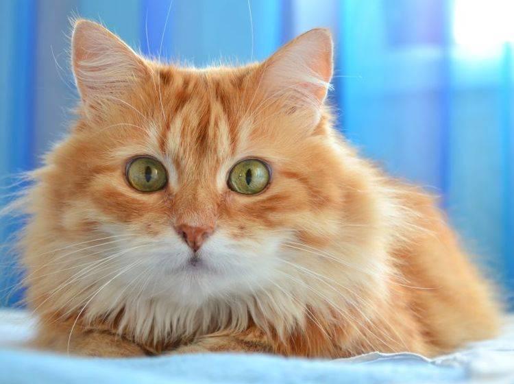 Wie süß: Adventskalender gibt's auch für Katzen! — Bild: Shutterstock / Sonet