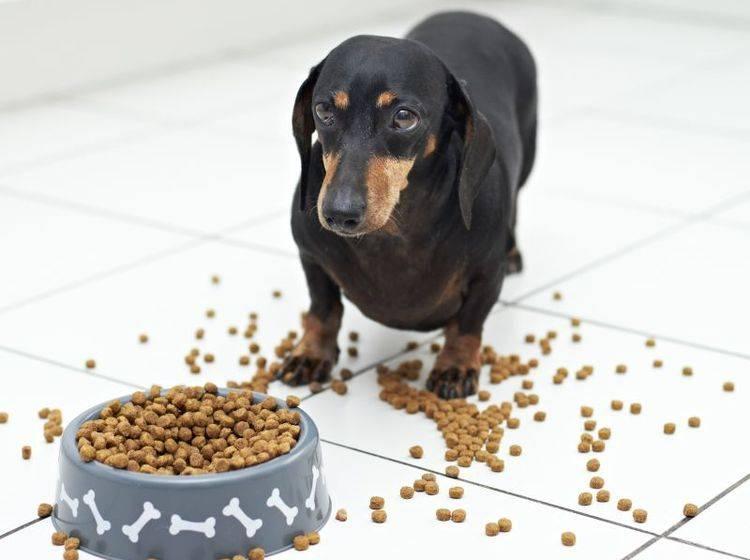Appetitlosigkeit bei Hunden: Manchmal liegt es nur am falschen Futter! – Bild: Shutterstock / dogboxstudio