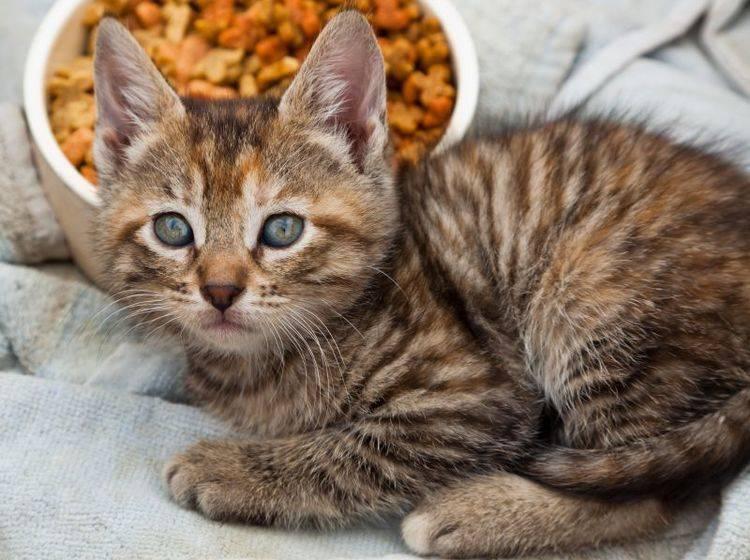 Appetitlosigkeit bei Katzen ist oft mit ein paar Tipps in den Griff zu kriegen – Bild: Shutterstock / Tami Freed