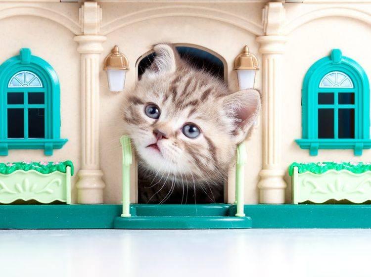Zum Kuscheln und Verstecken: Das Katzenhaus – Bild: Shutterstock / Oksana Kuzmina