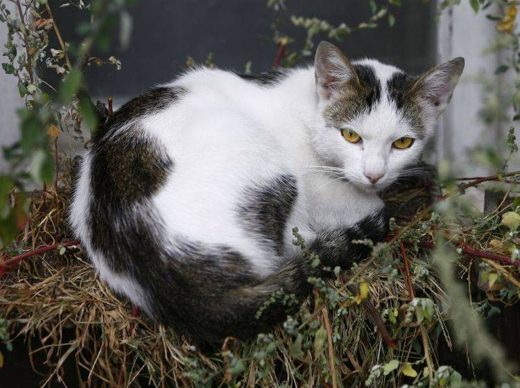 Katzen mit Arthritis liegen viel und sind allgemein weniger aktiv – Bild: Shutterstock / Nemar74