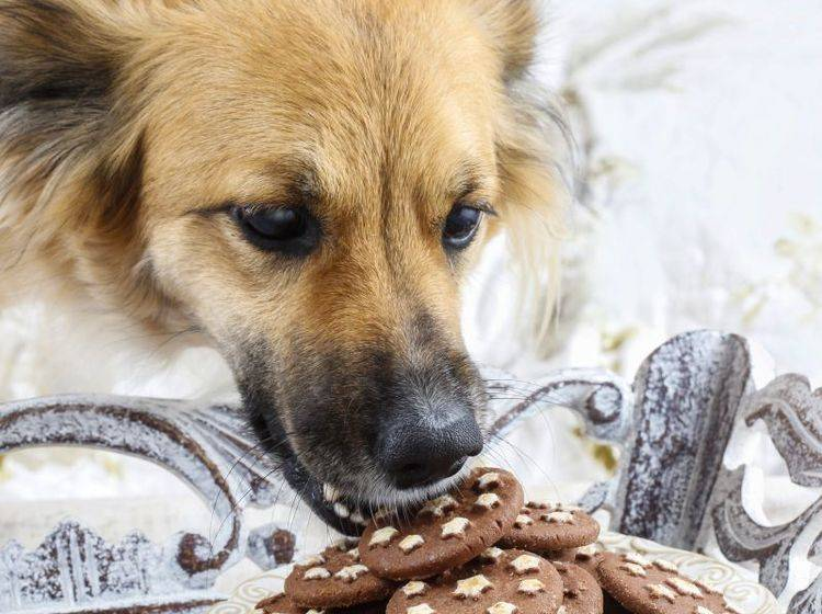 Klauen vom Tisch sollte sich der Hund gar nicht erst angewöhnen – Bild: Shutterstock / Agnes Kantaruk