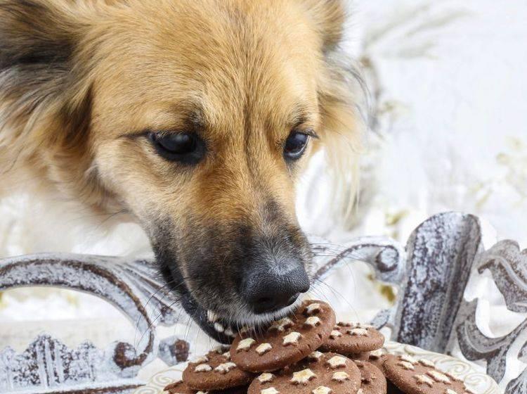 Hund Klaut Essen Vom Tisch