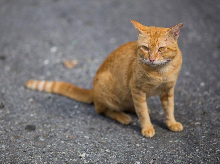 Streunerkatzen lieben vor allem die Freiheit – Bild: Shutterstock / Chaiplay