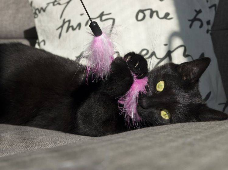 Vier Spielangeln die Katzen in Schwung bringen – Bild: Shutterstock / Sushaaa