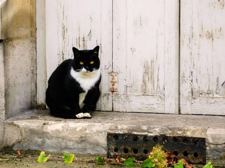 Nicht jede zugelaufene Katze ist gleich herrenlos – Bild: Shutterstock / Elena Dijour