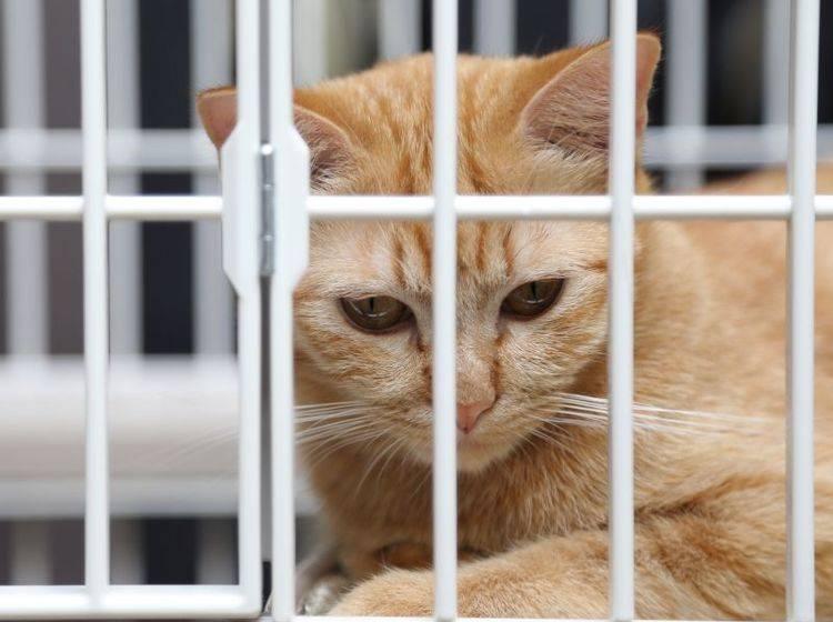 Den Tieren zu liebe: Katzenfutter ohne Tierversuche – Bild: Shutterstock / kimberrywood