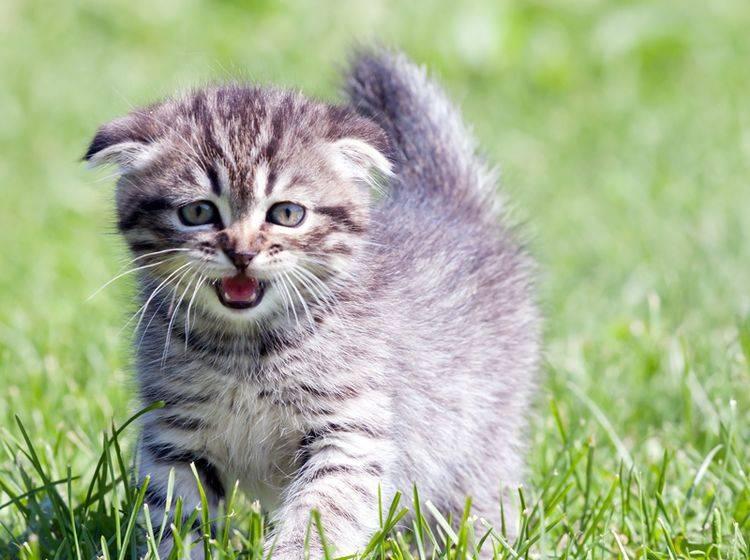 Ängstliche Katze: Körpersprache richtig deuten – Bild: Shutterstock / Ivan1981Roo
