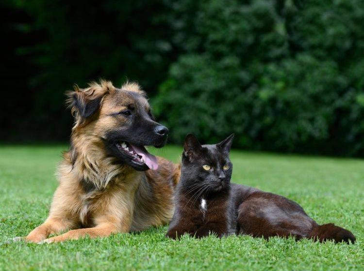 Dass es demnächst eine Katzensteuer gibt, ist eher unwahrscheinlich – Bild: Shutterstock / Schubbel
