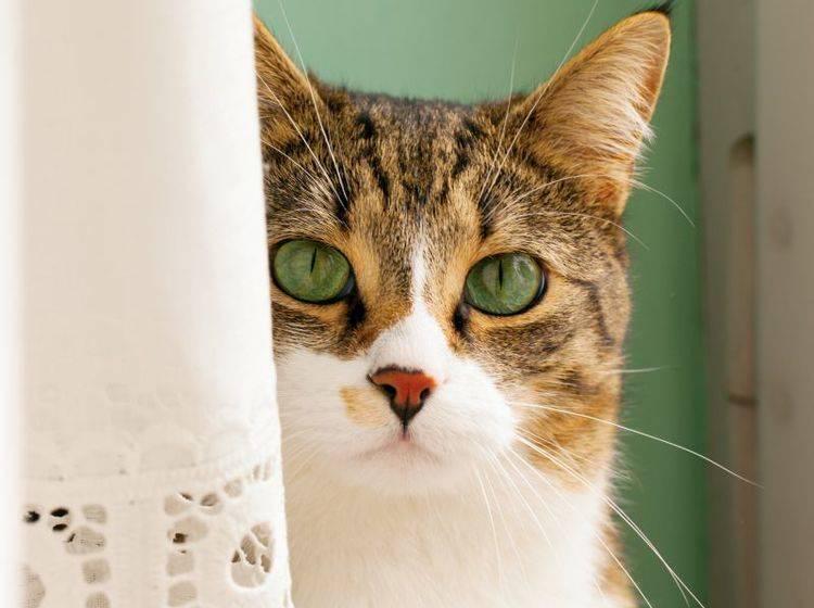 Zu viel Stress: Nach einem Umzug sind viele Katzen plötzlich nicht mehr stubenrein – Bild: Shutterstock / Fabio Alcini