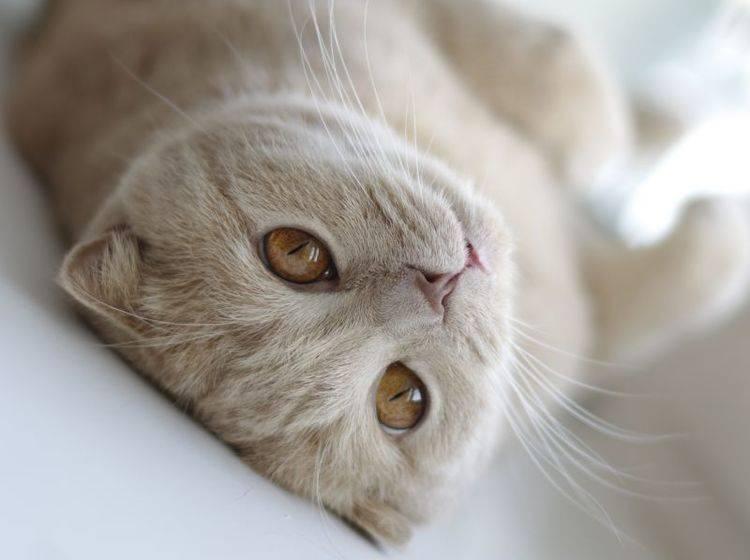 Katze alleine lassen: Langeweile muss nicht sein – Bild: Shutterstock / papa1266