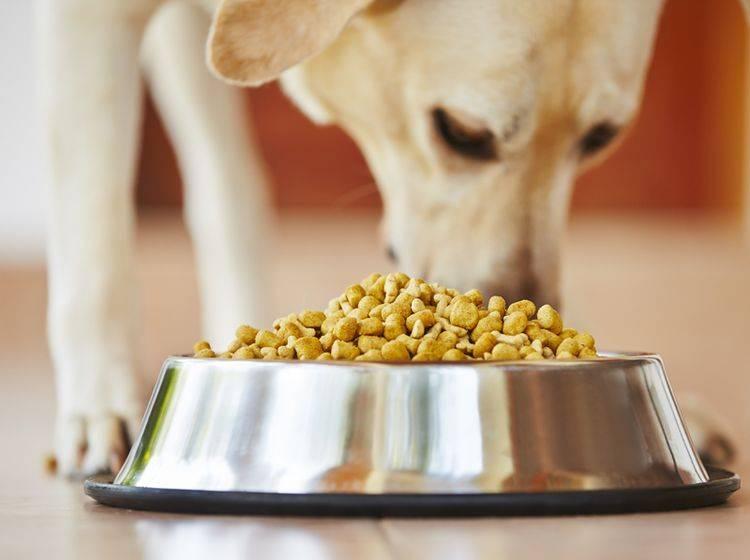 Tipps zum Kauf: Getreidefreies Hundefutter – Shutterstock / Jaromir Chalabala