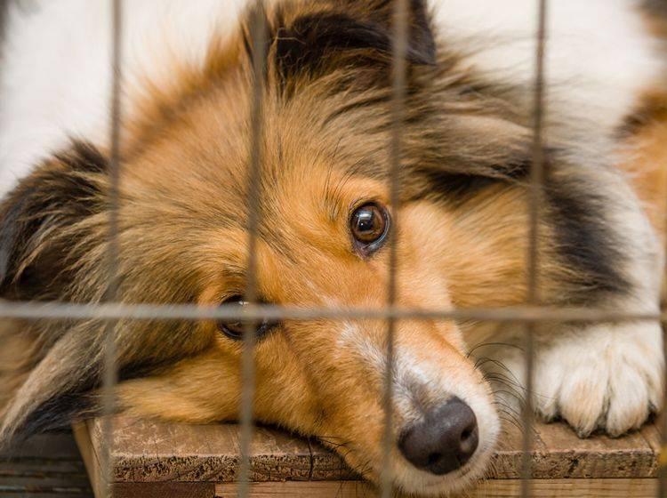 Hundefutter ohne Tierversuche: Darauf sollten Sie achten – Bild: Shutterstock / atiger