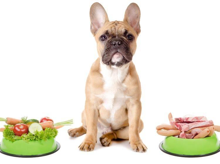 Ist veganes Hundefutter gesund? – Bild: Shutterstock / Robert Neumann