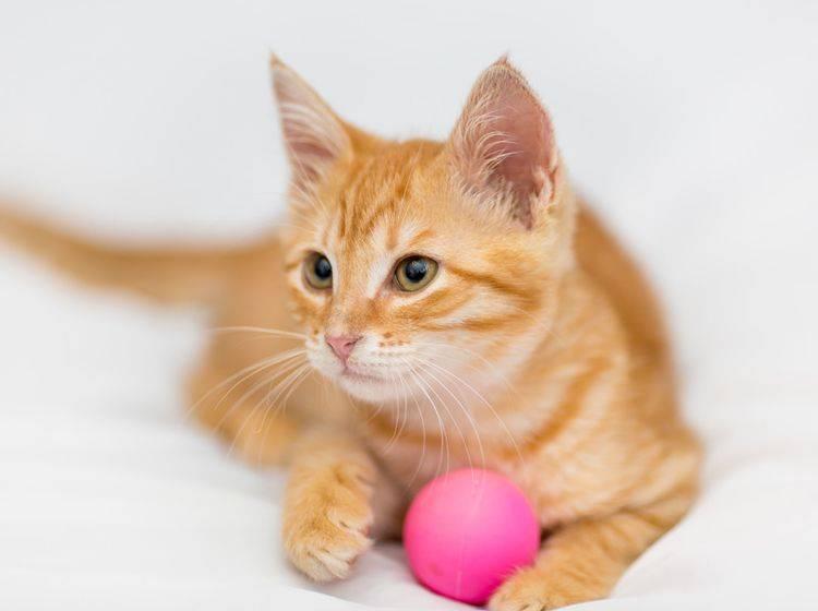 Vier Spielbälle mit Special Effects für Katzen – Bild: Shutterstock / Okssi