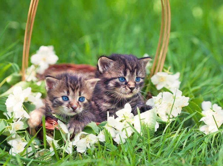 Süß und niedlich muss auch der Katzenname sein – Bild: Shutterstock / vvvita