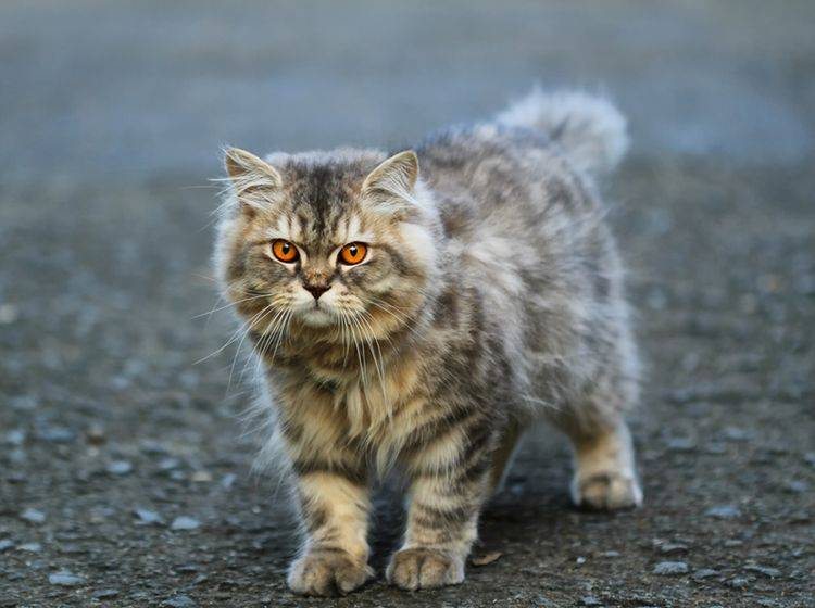 Die Welt der Stars liefert viele coole Katzennamen – Bild: Shutterstock / ismed_photography_SS