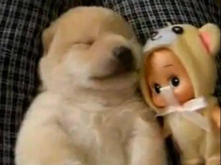 Wenn Babyhunde träumen... – Bild: Myideo / Tommy08k
