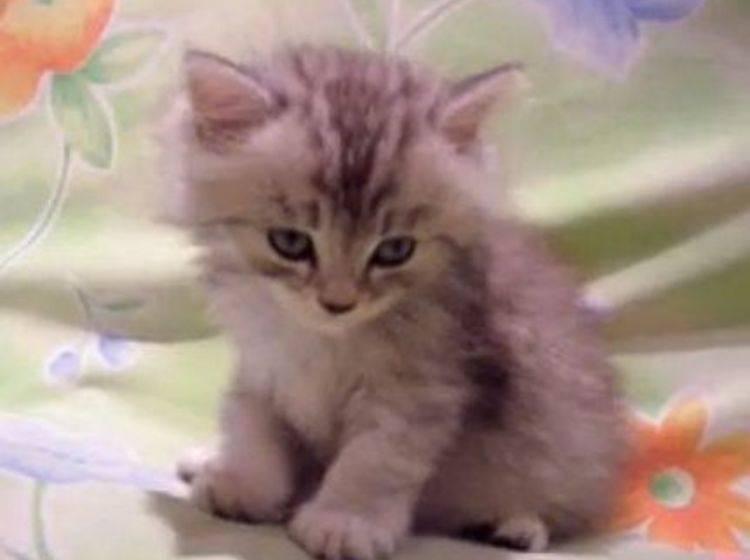 Warum so müde, kleines Kätzchen? – Bild: Myvideo