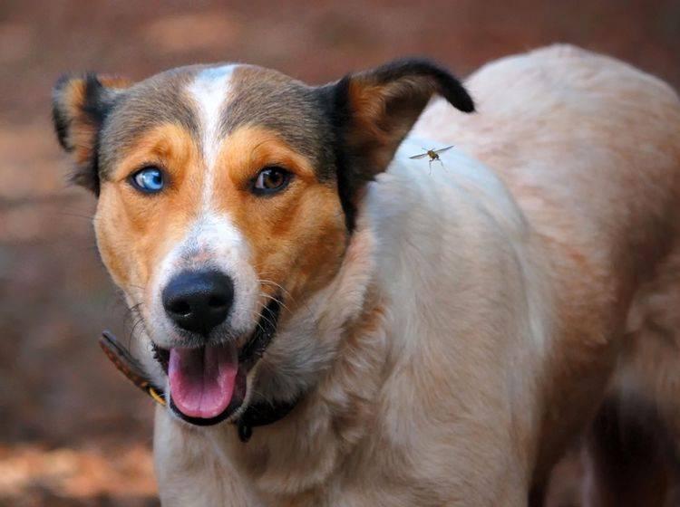 Insektenstich beim Hund: Erste Hilfe – Bild: Shutterstock / Fabricio Nihues