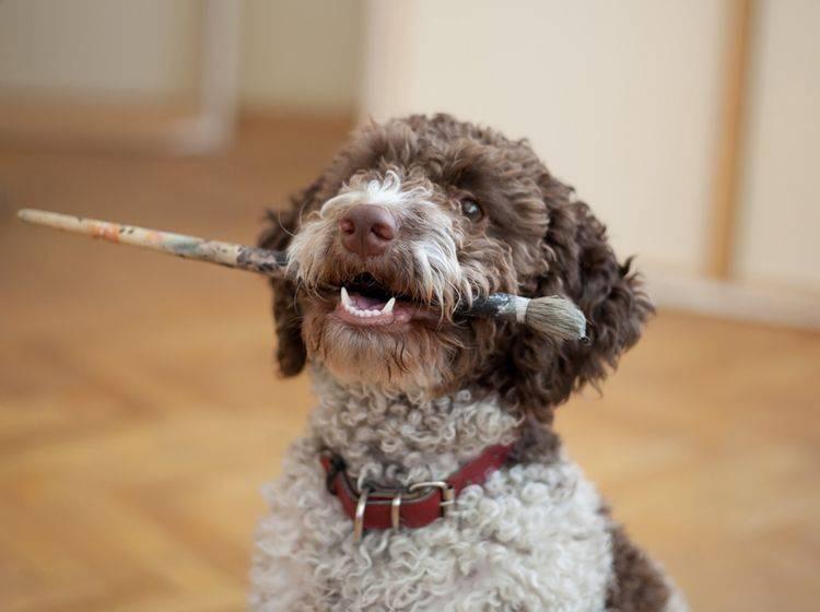 Ursachen von Zahnstein beim Hund – Bild: Shutterstock / aerogondo2