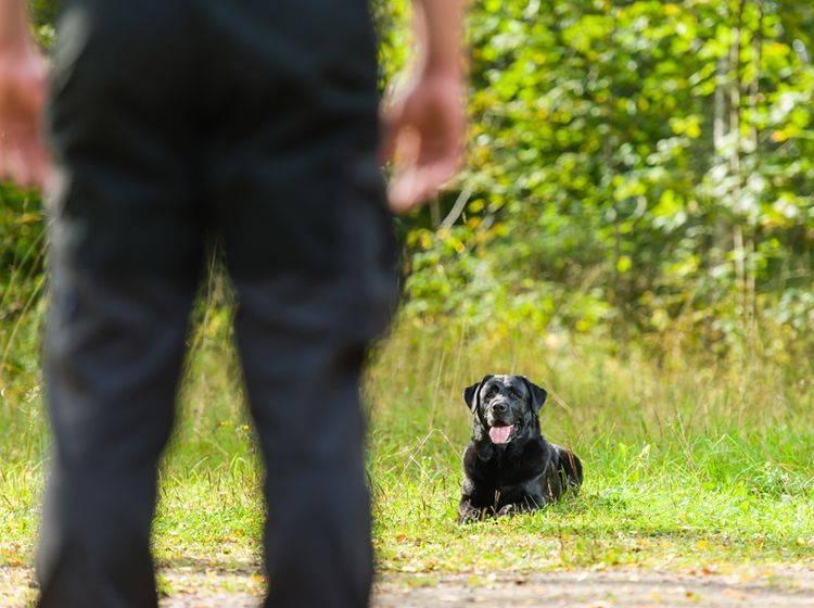 Obedience Training erfordert perfektes Zusammenspiel zwischen Mensch und Hund – Bild: Shutterstock / Jari Hindstroem