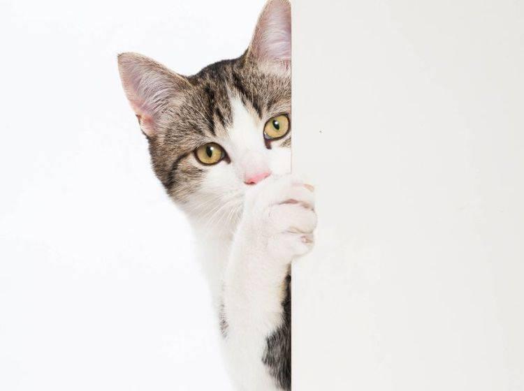 Wie man es dreht und wendet: Katzen sind keine Fans von geschlossenen Türen – Bild: Shutterstock / Dora Zett