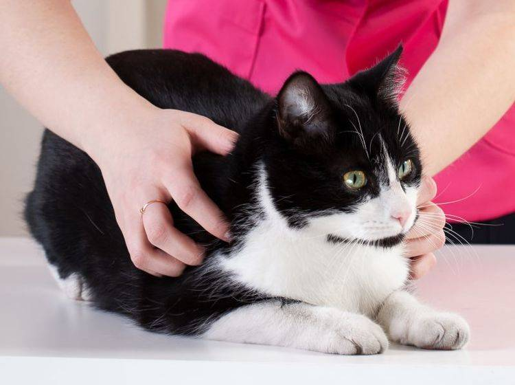Beim Tierarzt wird die Bisswunde zunächst genau untersucht – Bild: Shutterstock / Photographee.eu