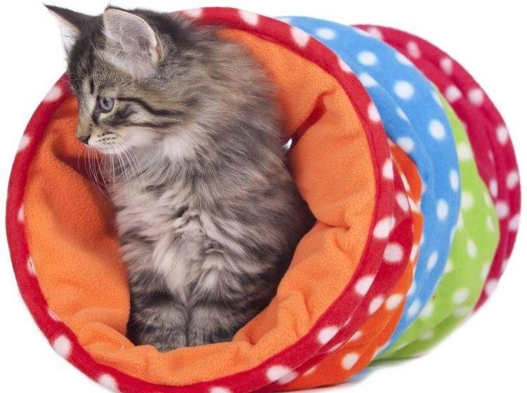 """Der Tunnel ist eines der möglichen Hindernisse beim """"Cat Agility"""" – Bild: Shutterstock / absolutimages"""