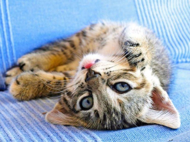 Für Katzen gilt: Krallen bitte nur am Kratzbaum wetzen! – Bild: Shutterstock / devy