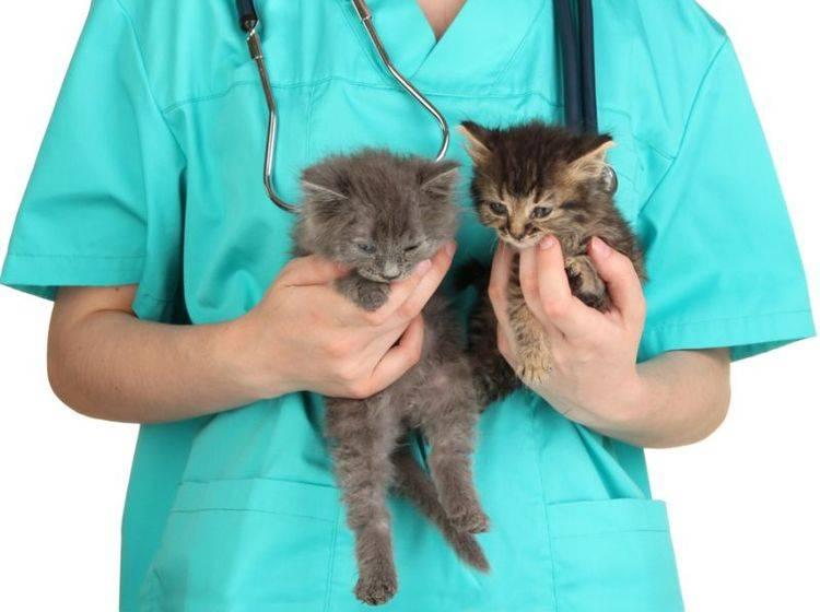 Bei einem Befall mit Hautpilz müssen alle Haustiere behandelt werden – Bild: Shutterstock / Africa Studio
