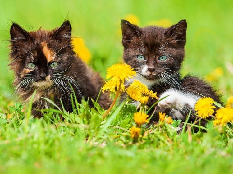 Katze oder Kater? Viel wichtiger ist der Charakter – Bild: Shutterstock / Rita Kochmarjova
