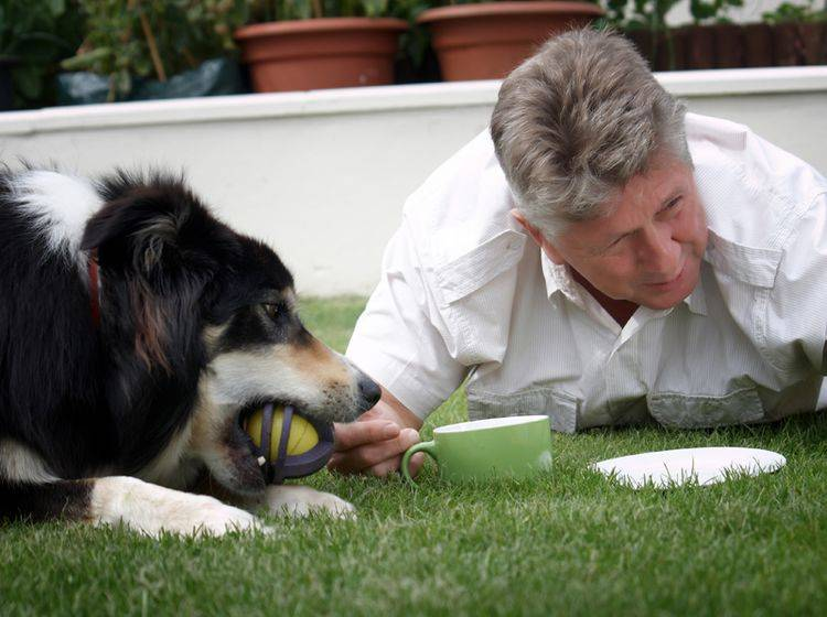 Wie dort mit den Tieren umgegangen wird, ist ein wichtiges Merkmal für eine gute Hundepension – Bild: Shutterstock / salpics32