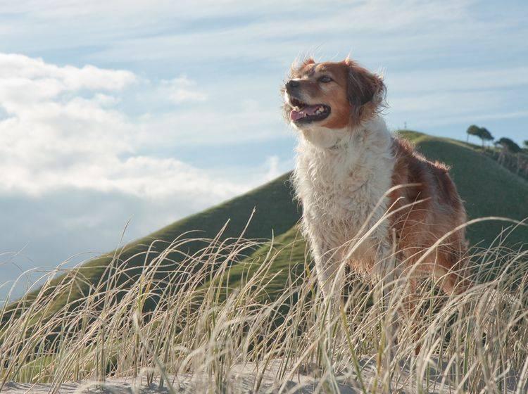 Wer Urlaub mit Hund machen möchte, muss zu den schönsten Zielen gar nicht weit reisen – Bild: Shutterstock / S Curtis
