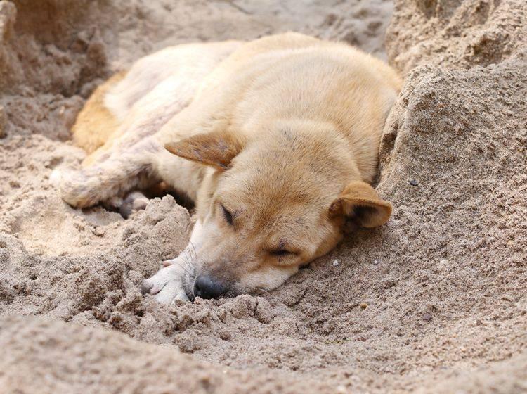Erste Hilfe kann bei einem Hitzschlag überlebenswichtig sein – Bild: Shutterstock / FreeBirdPhotos