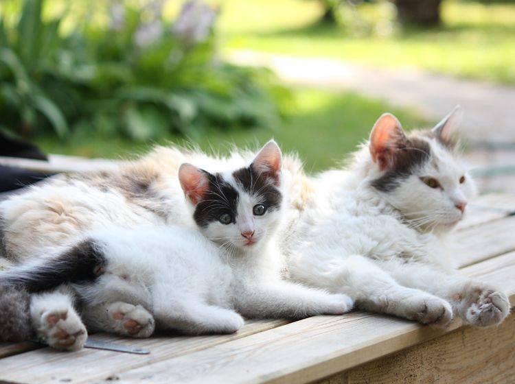 Die Zeit in der Katzenpension kann der Samtpfote viel Spaß machen – Bild: Shutterstock: Anastasija Popova