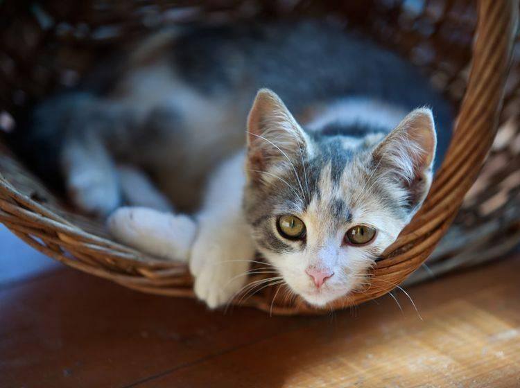 Der Charakter der Hauskatze kann ganz unterschiedlich ausfallen – Bild: Alexey U