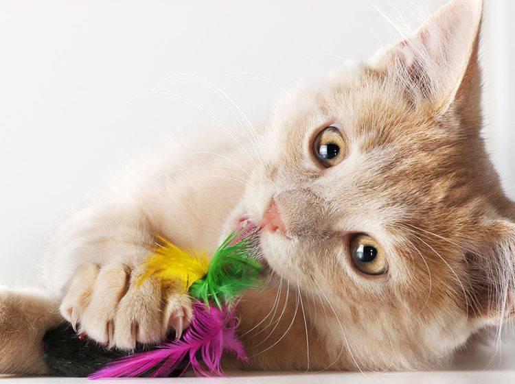 4 tolle Ideen für Katzenspielzeug aus Sisal – Bild: Shutterstock / Stefano Garau