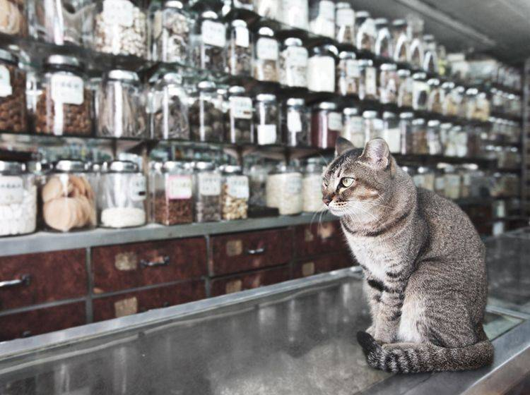 Für Katzen gibt es unzählige homöopathische Mittel – Bild: Shutterstock / Khoroshunova Olga
