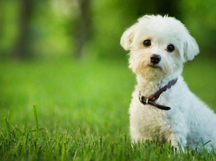 Ein Welpe sollte schnell seinen Namen lernen– Bild: Shutterstock/Mary Rice