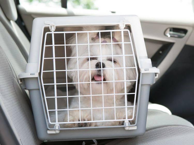 Transportboxen für Hunde – Bild: Shutterstock / Monika Wisniewska