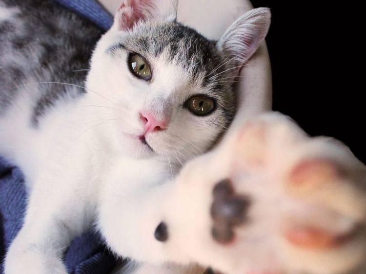 Zubehör für Agility mit Katzen – Bild: Shutterstock / Zoltan Zempleni